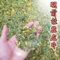 桂花龙井新茶 2019杭州西湖桂花明前一级龙井绿茶叶 散茶批发500g