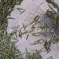 生态竹叶青 联君茶叶 厂家直销 新款茶叶竹叶青