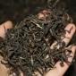 普洱茶 散茶 2007年邦威王有机茶 古树茶 500克 干仓老茶 批发