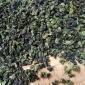 秋茶 清香型 安溪本山 铁观音茶叶散装批发500克 酒楼餐馆工厂茶