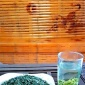 四川特产茶叶2016新茶明前高山绿茶批发散装绿毛峰量大从优